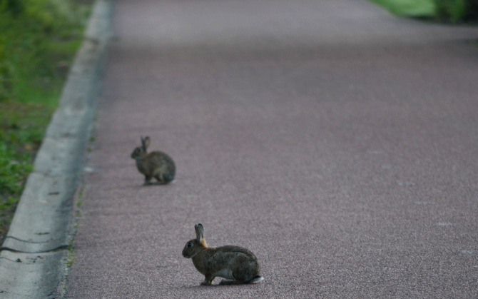 rabbits-in-bike-lane