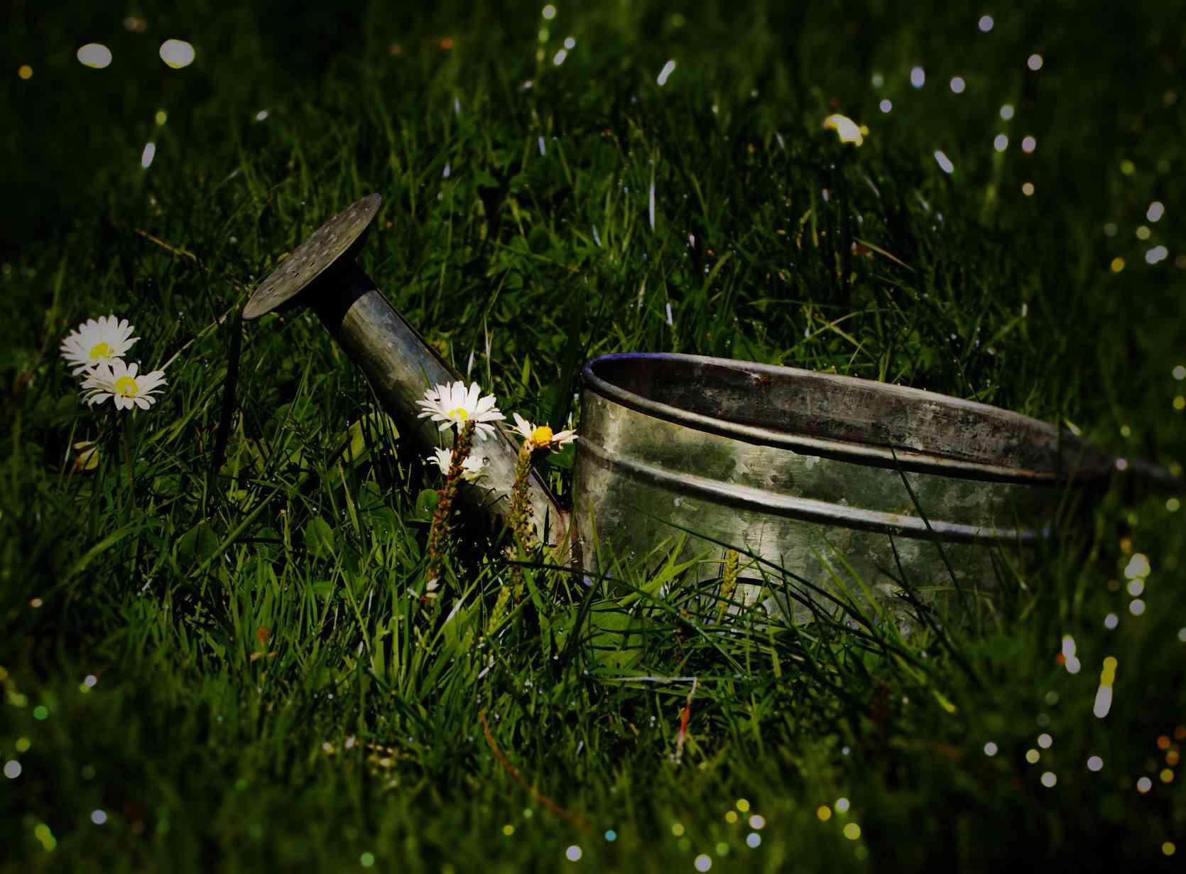 lawn-watering-