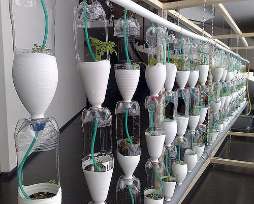 window-farming