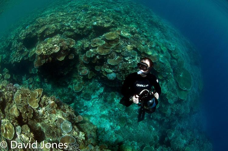 Plastic Oceans Foundations