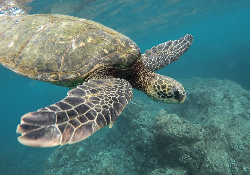 ocean-animal-extinction-help-turtle