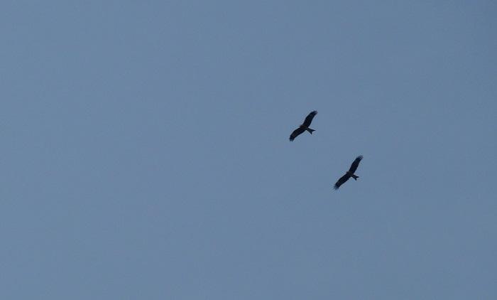 Kites Flying Over the Yangtze